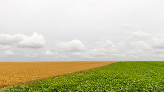 brown and green fields
