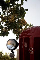 IMG_0375 (ACATCT) Tags: old españa tractor spain traktor agosto toledo antiguo massey pistacho tembleque barreiros 2015 bustards perdices liebres avutardas ff30ds r350s