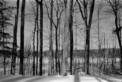 Untitled (Armin Schuhmann) Tags: old trees winter shadow blackandwhite bw snow canada cold film nature monochrome yellow forest 35mm vintage lens prime blackwhite woods nikon focus noiretblanc quebec grain wideangle s ishootfilm scan negative filter sw mf pelicula manual filme monochrom nikkor agfa rodinal expired schwarzweiss apx f28 400asa argentique filmscan nikomat nikkormat selfdeveloped filmphotography 2015 agfaapx400 ft2 shootfilm schwarzweis filmphoto rodinal1100 filmisnotdead 35mmf28s schwarzundweiss  35mmf28 analogo y44 longlivefilm believeinfilm buyfilmnotmegapixels expired2011