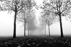 Nel viale (stefyBuff) Tags: viale autunno foglie