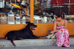 Talking to a friend (Otacílio Rodrigues) Tags: mulher woman girl garota cachorro dog vitrine storefront decoração decoration loja store homeaccessories streetphoto candid urban resende brasil oro topf25