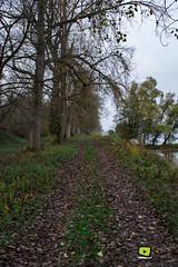 Sortie_photos_13_11_2016-7 (valdu67photographie) Tags: 2016 alsace automne basrhin eau faune rhin