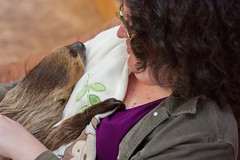Me holding a sloth (r.e.s) Tags: sloth zoologicalwildlifeconservationcenter