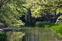 Turtle Pond, 05.12.13 (gigi_nyc) Tags: nyc flowers nature spring centralpark turtlepond themall shakespearegarden thereservoir