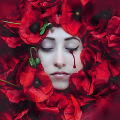 Resonance in the Crimson Garden (Kindra Nikole) Tags: red beautiful crimson rose sadness pain blood shed tragedy cry tear bleed sorrow textured resonate sorrowful