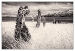 Old fence posts (mistymornings99) Tags: wales river landscape ir unitedkingdom decay infrared concept photostyles boulston
