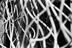 ---_0052 (zzkt) Tags: brussels blackandwhite film monochrome iso400 bruxelles be brussel greyscale leicam6 fujineopan400 bruxxel brsel msopticalsonnetar50mmf11