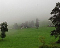House and trees in the fog (echumachenco) Tags: trees house grass fog schweiz switzerland nebel suisse suiza haus zug gras svizzera bume zugerberg iphone5 uploaded:by=flickrmobile flickriosapp:filter=nofilter