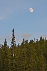 Half Moon Near Half Moon Creek (cwgeorge23) Tags: trees moon colorado moonrise leadville lunar