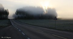 Beware of moose. EXPLORED 29.9.2013 (K. Haagestad) Tags: road morning sign fog sunrise thephotographyblog