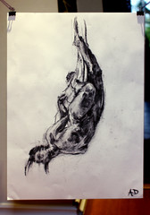life drawing (Alfie Dwyer) Tags: sculpture woman white black nude body down charcoal hanging cloth upside