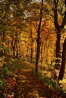 2013 - Autumn Walk