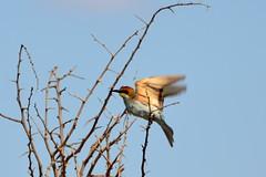 Kruger National Park (OurPhotoWork) Tags: travel bird birds southafrica wildlife safari krugernationalpark kruger gamedrive africansafari africasafari krugernp travelplanet ourphotowork sa2013