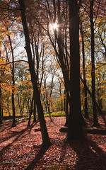 Copperwoods (Alan-Taylor) Tags: uk autumn trees red england canon yorkshire beech grassington yorkshiredales 600d