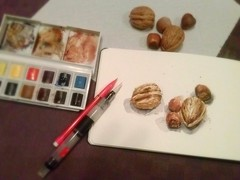Testing my new Caran d'Ache watercolor brush (Aurelie Morin) Tags: stilllife watercolor sketch aquarelle nuts naturemorte noix noisettes sketchkit