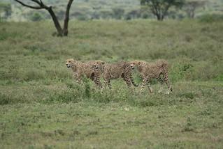 Namibia Safari - Lake Lodge 29