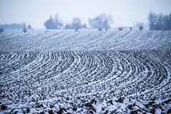 A dash of white