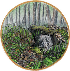 Porcupine in a F