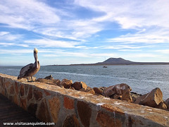 San Quintin Baja-133 (bajabrains) Tags: sunset cactus beach sports fauna volcano restaurant hotel san tour sierra pedro motor whales baja guide 1000 quintin martir {vision}:{outdoor}=0908 {vision}:{sky}=097 {vision}:{ocean}=0869 {vision}:{sunset}=06 {vision}:{clouds}=0942 {vision}:{car}=0667 {vision}:{mountain}=0532 {vision}:{beach}=0604