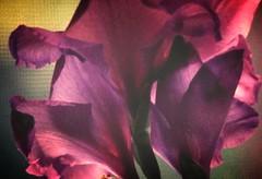 happy spring, nowruz!