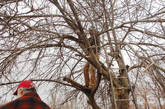"Apple Pruning Party <a style=""margin-left:10px; font-size:0.8em;"" href=""http://www.flickr.com/photos/91915217@N00/13528536804/"" target=""_blank"">@flickr</a>"