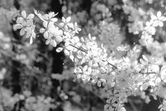 Spring (Spotmatix) Tags: camera film monochrome canon landscape effects countryside belgium places villerslaville brabantwallon tseries polypanf iso050