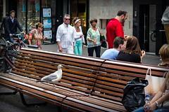 (ingehoogendoorn) Tags: seagulls bird birds seagull gull gulls thenetherlands streetphotography vogels denhaag meeuw meeuwen streetview vogel zeemeeuw zeemeeuwen straatfotografie langepoten haagsemeeuw