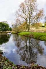 Still waters (skipnclick) Tags: cotswolds upper slaughter river tree reflection still water overcast sky february nikon d610 28300 explore