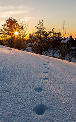 Animal Footprints (abdurj) Tags: sunrise sunset sun clouds sky light tree travel beautiful paw animal white footprints footprint snow frost cold frozen winter dusk dawn oslo norway nature landscape outdoors season guidance weather ice