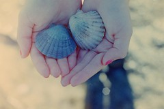 Offering. (Chris Gray Photo) Tags: shadow shells beach hands bokeh fingers