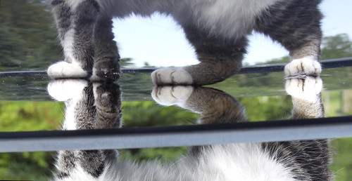 Cat paws reflected