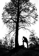 cheating (Bennett Fuhrman) Tags: new boy blackandwhite white black newmexico tree silhouette mexico cow cowboy western silloete