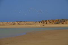 IMG_2202 (Coco272727) Tags: birds colombia desert lagoon punta guajira gallinas cabodelavela guajirapeninsula puntagallinas