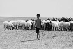 Mongolian Goat & Sheep Herder In The Gobi (El-Branden Brazil) Tags: gobi herder sheep goats mongolia mongolian asia asian buddhist horses buddhism nomads ulaanbatar steppes desert temples pigeons camels monks