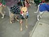 JingleBellWalk2010033