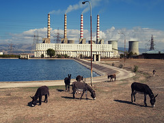 Electric donkeys (Sakis Dazanis) Tags:
