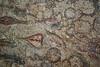 Mosaico de los Peces, detalle (Fernando Two Two) Tags: museum museu roman antique mosaic mosaico romano latin museo archeology romanempire tarragona mosaik tarraco arqueologia arqueología romà antigüedad imperioromano arqueològic mnat imperiromà