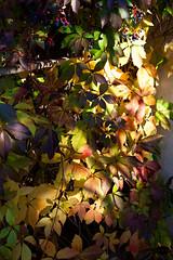 October sundown leaves (alexandra.major) Tags: autumn light shadow sunlight color colour macro nature leaves sunshine closeup leaf october sundown bokeh