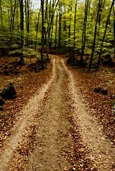 Cami de tardor (gemicr69) Tags: autumn espaa forest way spain camino sony catalonia girona bosque otoo catalunya alpha cami catalua bosc tardor fageda olot espanya a300 jorda dslra300 oltusfotos joangarciaferre gemicr gemicr69
