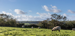 """Rural Panorama - Bembridge (s0ulsurfing) Tags: autumn england sky panorama cloud english nature weather clouds composition rural island countryside october scenery skies sheep natural britain farm patterns wide wideangle isleofwight british 12mm pastoral isle nube wight bucolic meteorology bembridge nephology 6d sigma1224 culverdown """"east 2013 s0ulsurfing"""