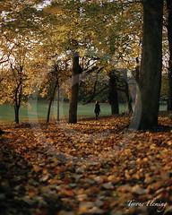 AUTUMN STROLL (Tyrone Fleming) Tags: autumn shadow sunlight leaves walking leaf autumncolors wakefield stroll shotonfilm contax645 filmphotography portra400 colorfilm kodakportra400 thornespark 80mmlens leavesinautumn gwtphotography newkodakportra400 tyronefleming carlzeissplanar80mmlens
