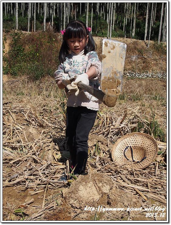 埔里筊白筍40