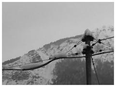 Guardare oltre (Cristina Birri) Tags: snow neve inverno palo montagna luce dolomiti friuli udine fornidisopra flickrandroidapp:filter=panda