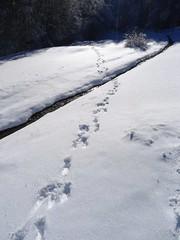 La pista dei lupi