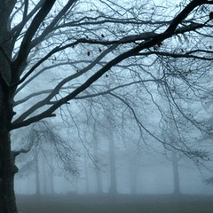 il canto del silenzio (Claudia Gaiotto) Tags: trees nature rain misty fog forest peace silence brumes neblas