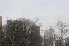 Untitled (anthonyiii_) Tags: urban cats canon 50mm photographer centralpark manhattan liam 1d dslr malik canondslr freelance photog ig amatuer megapixels youtube zayn twitter onedirection tumblr igers instagram instafam igdaily justgoshoot harrysttles