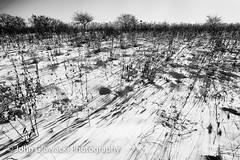 2014 365-9 (rustyuglythings) Tags: bw landscape 365 silverefexpro2