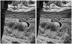 Fields of Hanalei (turbguy - pro) Tags: hawaii 3d crosseye stereo kauai infrared