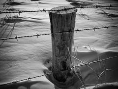 snow desert (beata goc) Tags: schnee bw snow black blackwhite sw neige landschaft nieuwvliet schwarzweis canonpowershotsx200is