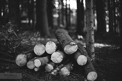 (desomnis) Tags: wood trees blackandwhite bw monochrome forest canon 50mm blackwhite woods f14 50mmf14 6d canon50mm canon50mmf14 schwarzweis canon50mmf14usm canon6d schwarzundweis canoneos6d desomnis